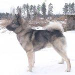 Björnjägarens Arci Odin